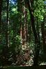 John Muir Woods_5823