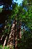 John Muir Woods_5825