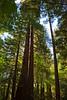 John Muir Woods_5822