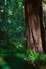 John Muir Woods_5842