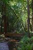 John Muir Woods_5849