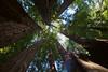 John Muir Woods_5826