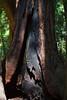 John Muir Woods_5838