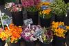 Sonoma Market_5670