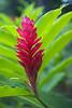 Tahiti_3009