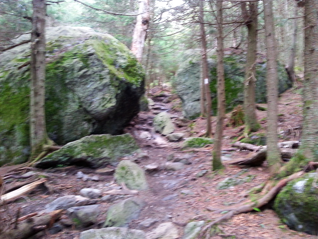 Long Trail Mt Abraham