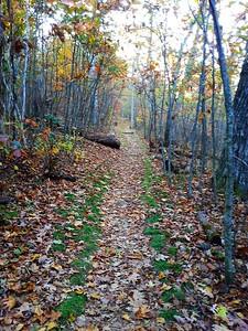 Mary's Rock Hike Shenandoah National Park