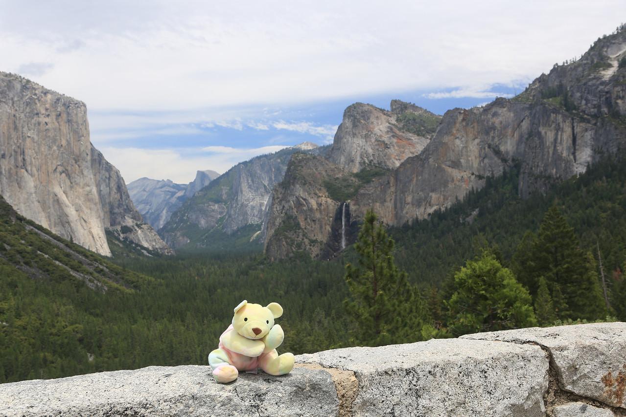 Sherbert at Yosemite... he loves to travel!