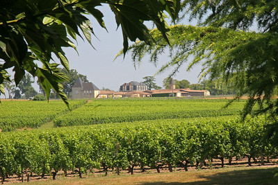 """Our 2nd winery in Sauterne, Chateau Giraud (""""gee-roe"""", with a hard """"g"""" as in """"get"""" or """"guy"""")."""