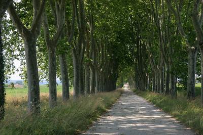 Driveway, Chateau Giraud.