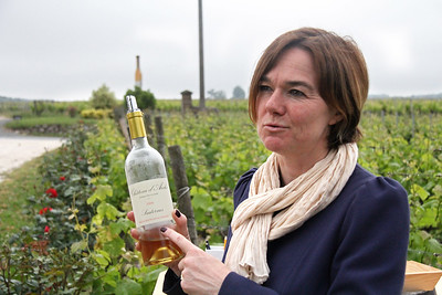 Chateau d'Arche ... our second guide tells us more about the viniculture of Sauterne wines.