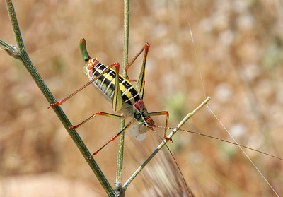 We saw several of the colorful grasshoppers while exploring Mycenae.