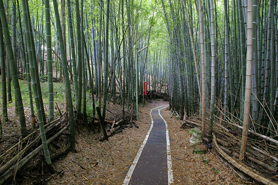 A bamboo forest covering an urban park in SenriChuo, a suburb of Osaka where we stayed.