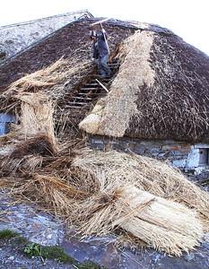 Re-thatching a palloza roof.