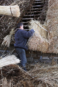 Re-thatching a palloza roof.