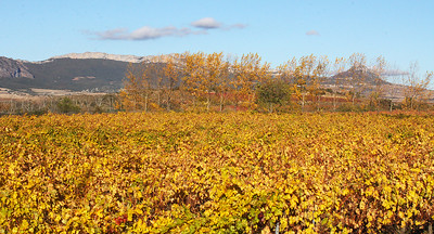 Color in Campillo's vineyards.