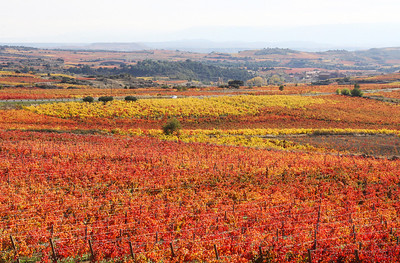 We were surprised to see how much color was still on the vines in early November in Rioja.