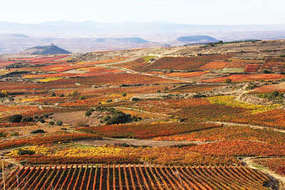 La Rioja wine district.