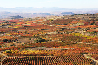 To our surprise and pleasure, the Fall colors were still on the vines in Rioja in early November.