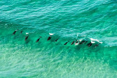 Dolphins at Byron Bay