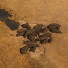 Flight over the Chobe River - Hippo