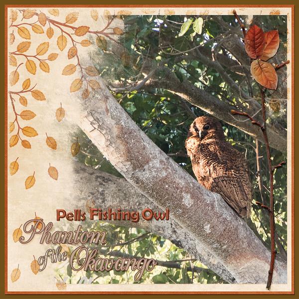 Pell's Fishing Owl
