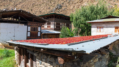 Red Chilli Peppers Drying on a Roof