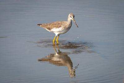 Skagit Wildlife Area-Wiley Slough, Conway, WA