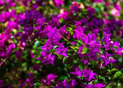 Queen Elizabeth II Botanical Gardens