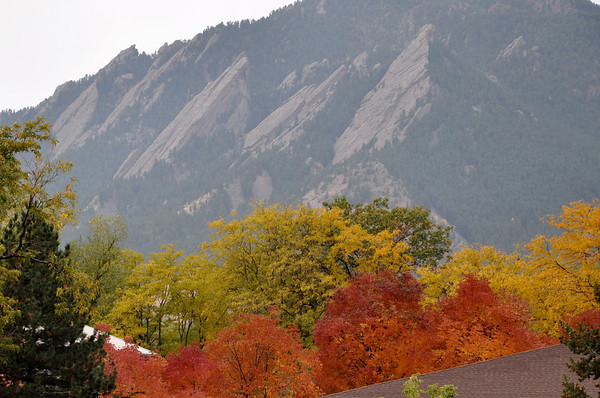 Fall colors in Boulder - Flat Irons in background