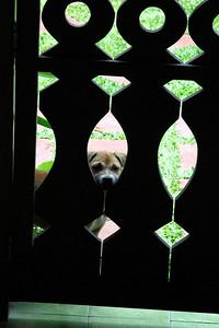 Let me in!!!!