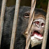 """<a href=""""http://animalsasia.org"""">http://animalsasia.org</a>"""
