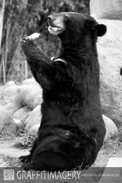 Animals Asia Foundation February 2010
