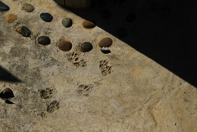 So cute....kitty paws in the dry concrete