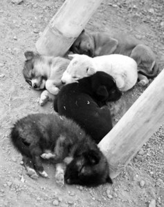 A new litter of puppies in one of the villages.  It was at least 100 degrees outside