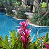 Burasari Spa Hotel in Phuket Thailand February 2010