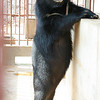BAM BAM the moonbear