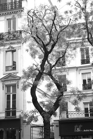 SHOPPING IN PARIS I wonder if this tree had been growing around something in the past that was cut away. So interesting  May 15 2013