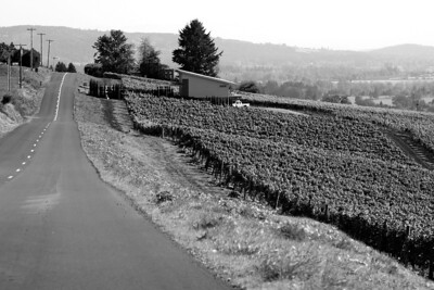 An Autumn drive during grape harvest , October 17, 2010