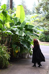 The day started out checking out how tall my banana trees had gotten this year
