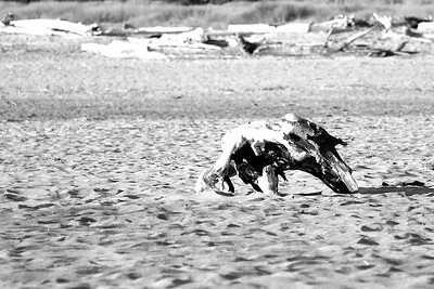 FROM A DISTANCE I THOUGHT FOR SURE THIS WAS A LARGE ANIMAL LOPING ACROSS THE SAND  August 2012 - A trip to the coast with Onni and Lil and Onni's first time seeing the ocean