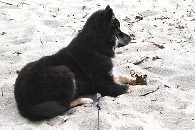 Handsome boy  Oregon Coast August 2012