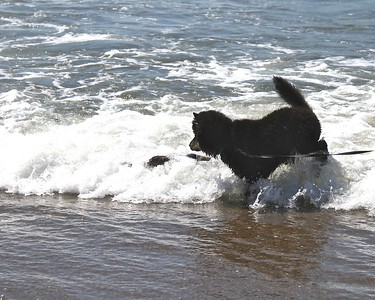 Onni loved finding the stick in the waves Oregon Coast August 2012