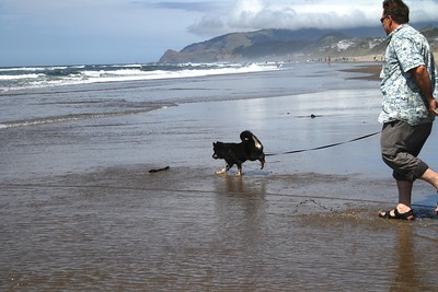 Fetching the big stick for daddy Oregon Coast August 2012