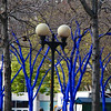 Blue trees by our hotel