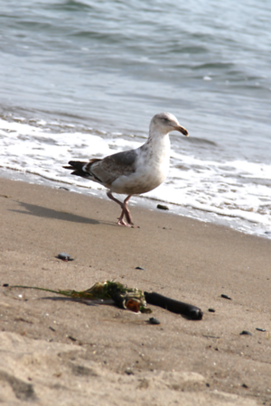 Lil really wanted this gull...and he totally taunted her