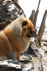 Lillian was on the top of a huge driftwood stump here for me to get these fun photo angles