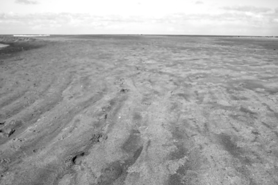 """""""Minus Tide"""" at it's lowest in the AM.  You could hardly see the waves in the distance. It was eerie to say the least"""