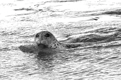 The wild seals were are fascinated with Lillian as she was with them.  I took a ton of photos but very few were of the face. They were so darned quick and had me laughing outloud for about an hour.