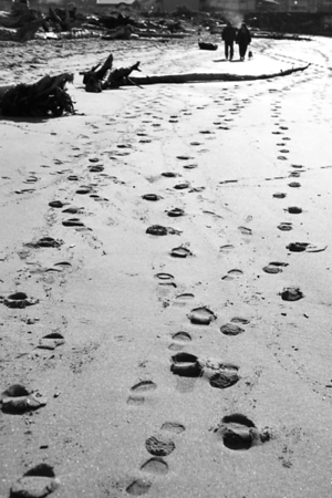 I loved the way the footprints tracked around the horizontal log